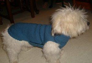 manteau chien côtes et jersey