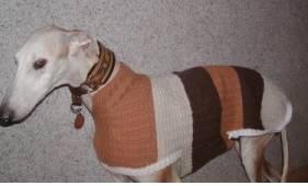 manteaux grands chiens : calgos